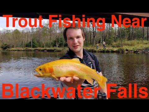 Trout Fishing Near Blackwater Falls