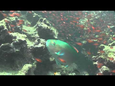 Undersea Exploration in Galápagos