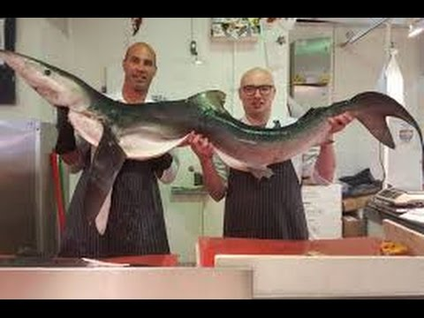Fishmonger School
