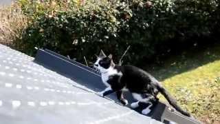 Un chat sur le toit...