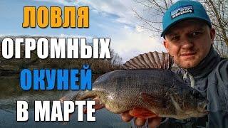 Ловля ОГРОМНЫХ окуней в марте! Как поймать окуня на микроджиг. Рыбалка 2017
