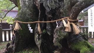 日本総鎮守・大山祇(おおやまづみ)神社