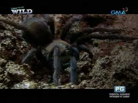 Born to be Wild: The rich wildlife of Bohol's cave