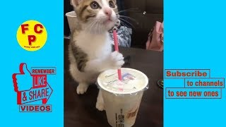 when do cats make comedians? ( funny cats youtube video ),( funny cats vines )