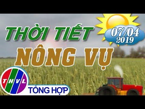 THVL | Thời tiết nông vụ (18h55 ngày 07/04/2019)