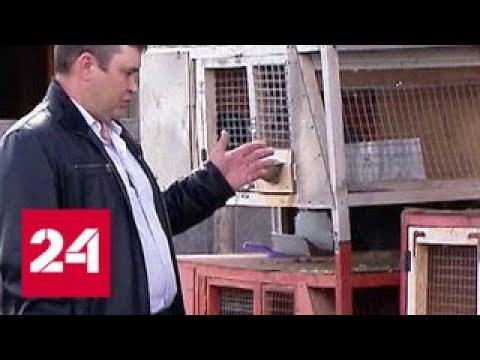 История курганского фермера удивила президента России - Россия 24