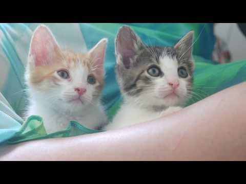 Curious cats 4k UHD 🐱 🐈