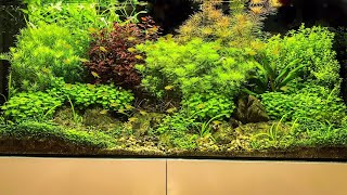 AQUASCAPES from Juwel and Dennerle at Interzoo 2018