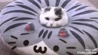 Смешные котята-Funny cats