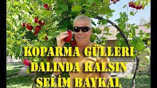 Video SELİM BAYKAL KOPARMA GÜLLERİ download MP3, 3GP, MP4, WEBM, AVI, FLV Desember 2017