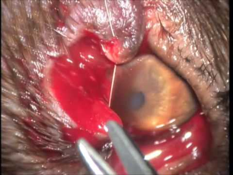 Dog Cancerous Growth On Eyelid