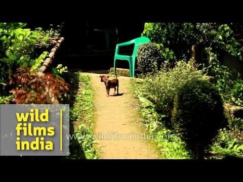 kalimpong-animal-shelter---darjeeling