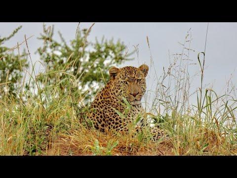 Luxury Safari in South Africa | AM Luxury Lodge