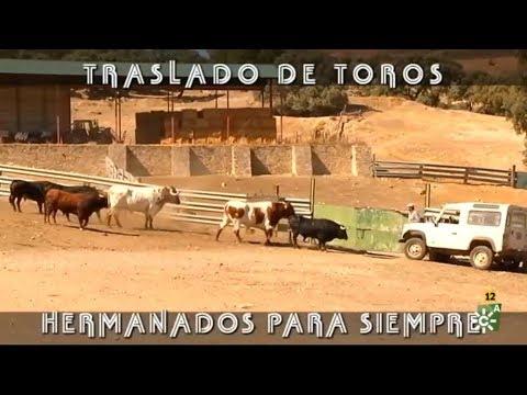 Traslado De Toros, Hermanados Para Siempre.