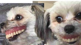 Man Wakes Up To Find His Dog Suddenly Has A New Smile