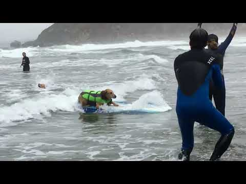 World surfing competition for dogs