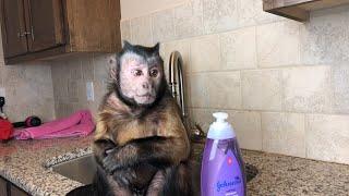 Monkey Midnight Bath Routine! LIVE!