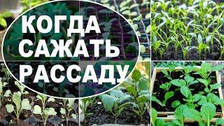 Рассада помидор и других овощей Когда сажать рассаду правильно