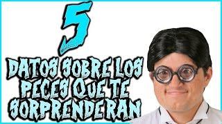 5 DATOS SOBRE LOS PECES QUE TE SORPRENDERAN