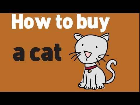 How to Buy a Cat? Buying a Cat and Kittens Tips