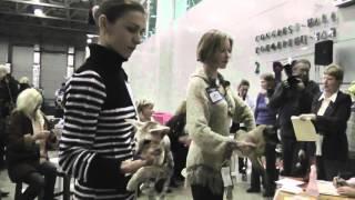 Выставка кошек ''FELINA BELISSIMA -- 4'' часть 2