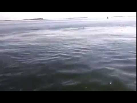 Mike Bergin loses his sh$t turns out its just a sunfish, very funny NSFW