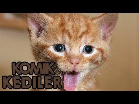 Tüm Zamanların Birbirinden Komik Kedi Videoları 2017 Kesin İzle