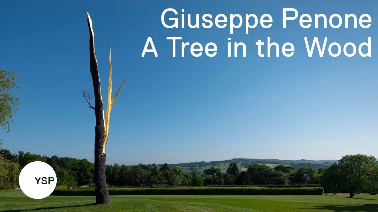 Giuseppe Penone: A Tree in the Wood