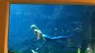 ハワイのパシフィックビーチホテルで人魚姫に遭遇しました(*^_^*)