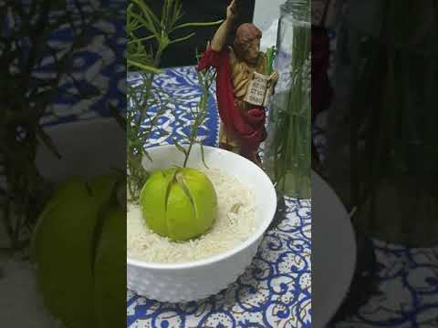 Ritual San Pancracio Empleo O Negocio Fortuna By Luzespiritualprosperidad Infinita Lemew