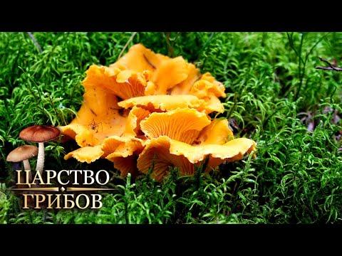 Вопрос: Почему грибы в большем количестве растут в молодых порослях деревьев?