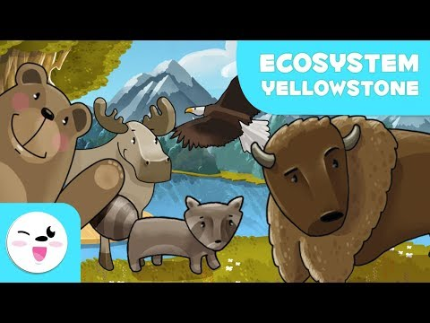 Yellowstone National Park Wildlife - Learning Ecosystems for kids