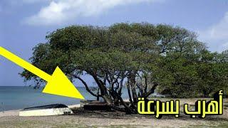 اذا رأيت هذه الشجرة اهرب بسرعة ولا تقترب أبدا  لأنها ستكون نهايتك شيئ خطير مخبئ..!!