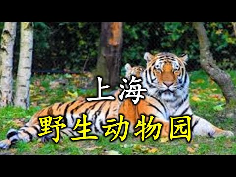 Shanghai Wild Animal Park - 上海野生动物园