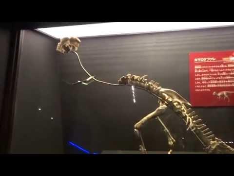 ホマロケファレ Homalocephale:「大恐竜展」ゴビ砂漠の驚異