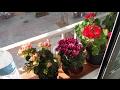 Комнатные растения зацветают.