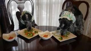 こどもの日に我が家のイングリッシュコッカーVJは 手作り食でお祝いしま...