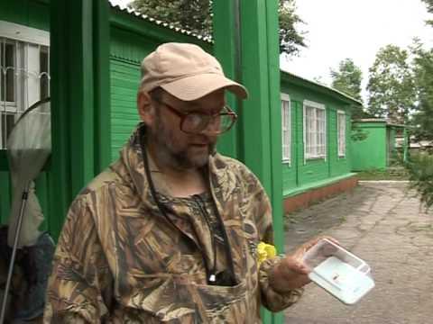 Энтомолог Владимир Дубатолов новый вид бабочки поймали под Хабаровском