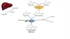 Ketone Body Synthesis | Ketogenesis | Formation Pathway and Regulation