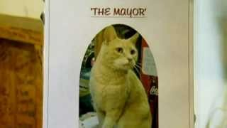 Кот переизбран мэром