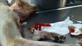 Белле остановили кровь из ран