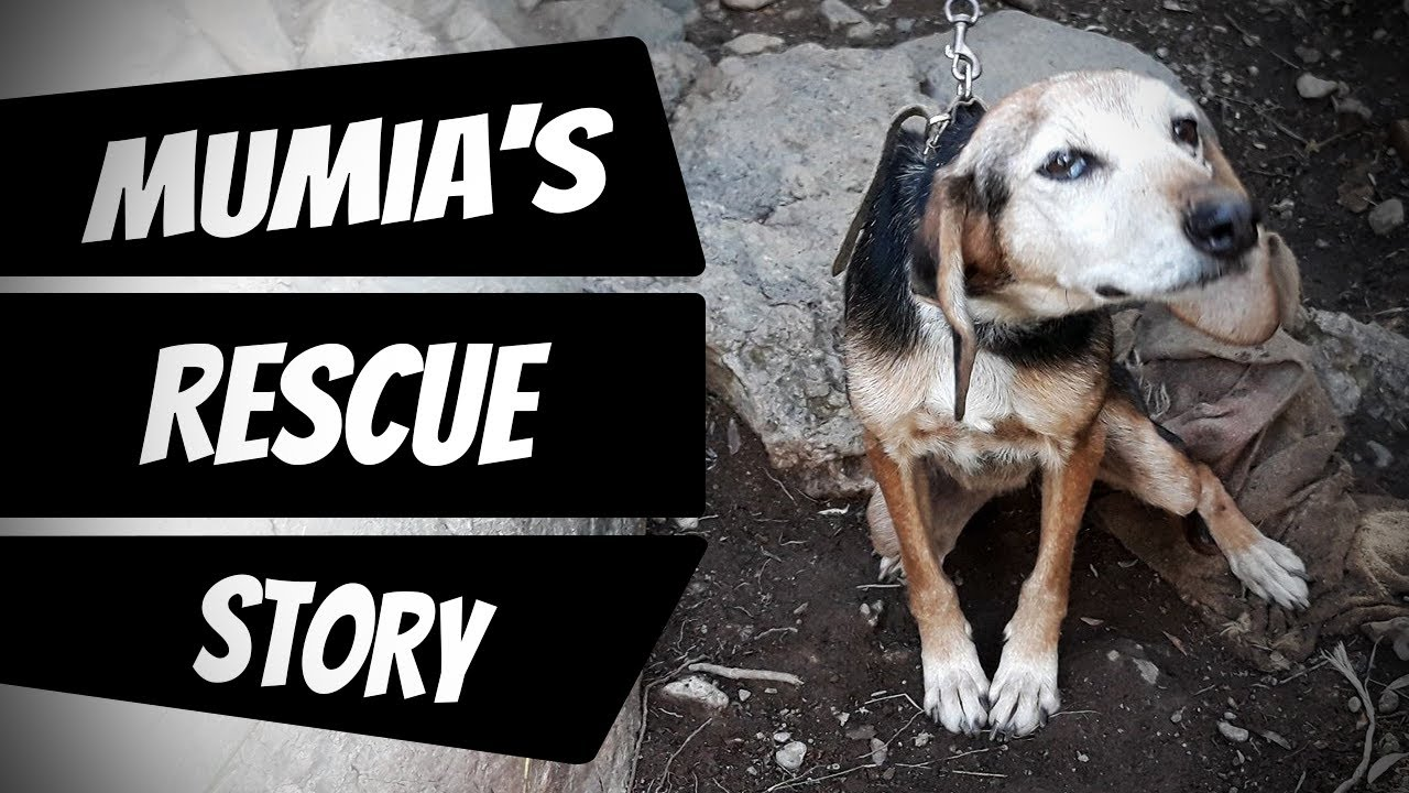 Download From chain to freedom - This is story of Mumia, rescued by Takis Shelter. Adopted to Finland.