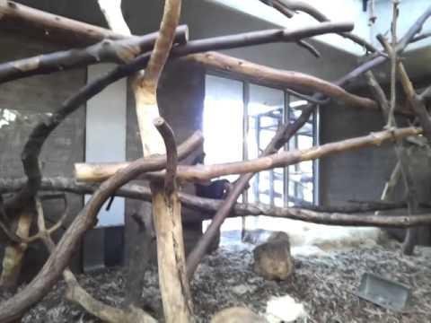 monkeys Amsterdam Holland zoo حديقة الحيوان أمستردام هولندا. تصوير: محمد جمال بواطنه