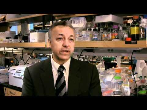 Bone Marrow Transplantation: Sickle Cell Anemia Treatment