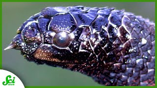 7 Animals That Evolved at Hyperspeed - Because of Us