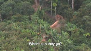 Uncontacted Amazon Tribe  First ever aerial footage