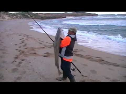 Fishing For A Big  Mulloway