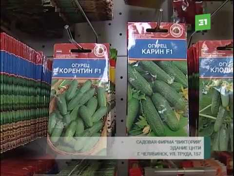 На Южный Урал привезли семена голландских огурцов