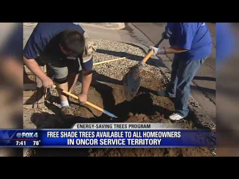 Oncor offering free shade trees
