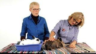 Are Rabbits Low-Maintenance Pets? | Pet Rabbits